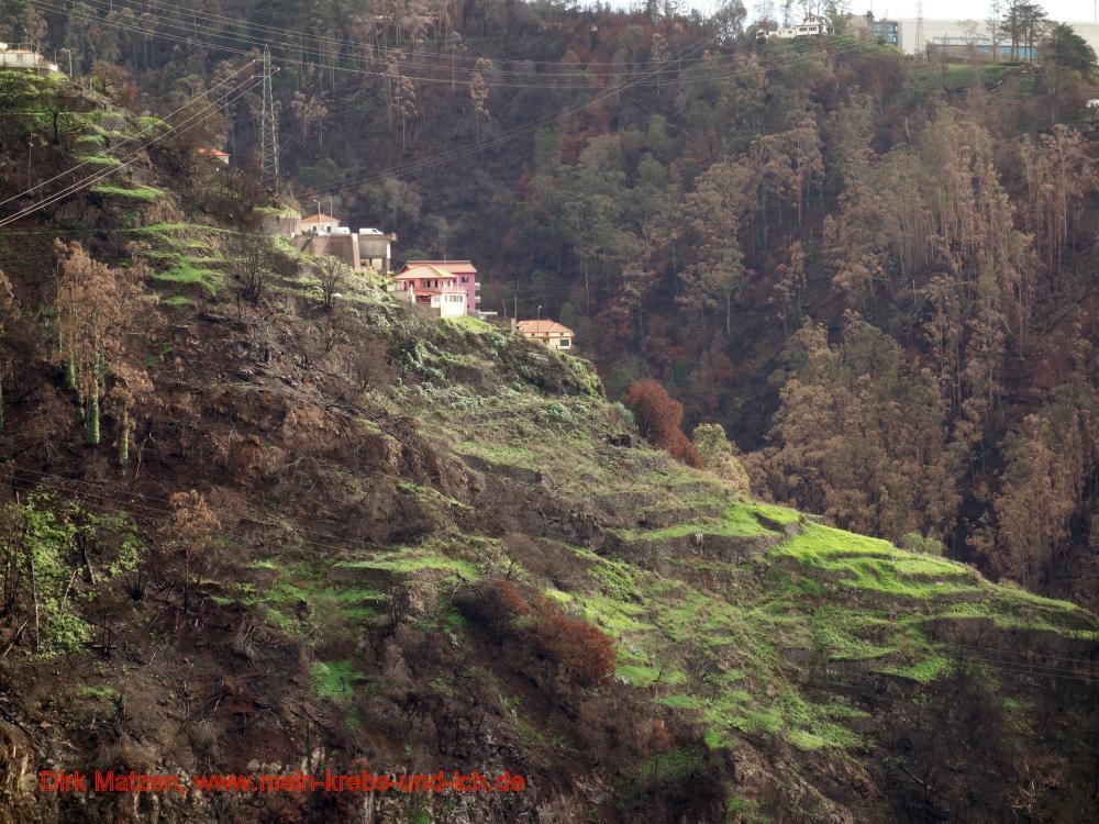 Häuser im Waldbrandgebiet